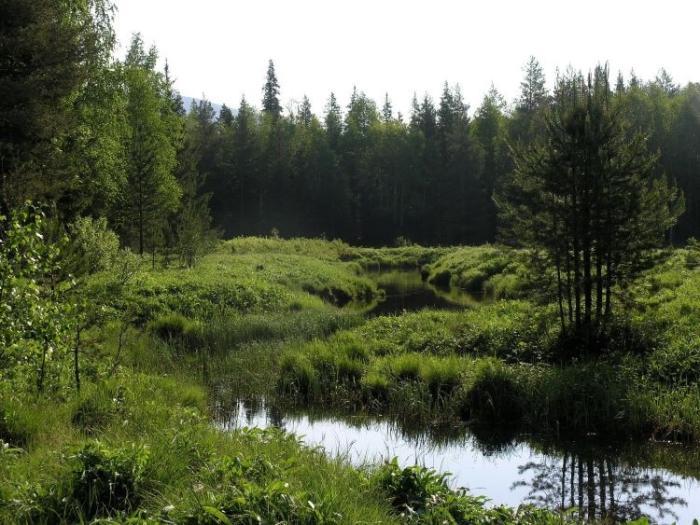 Большое моховое болото - Одно из самых загадочных мест национального парка «Таганай».