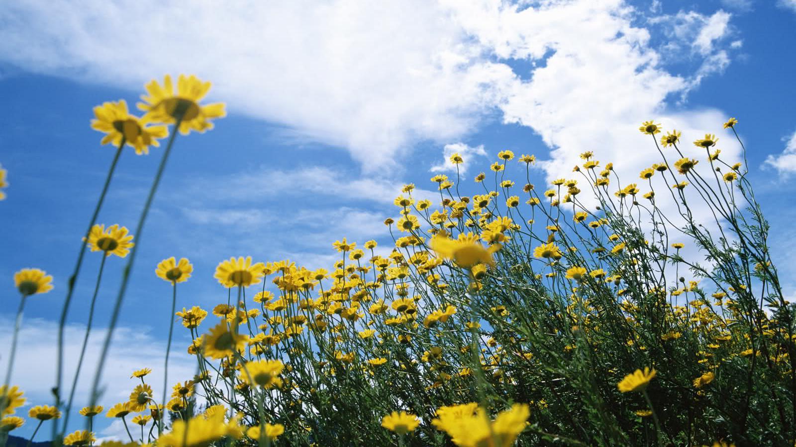 Картинки солнечной погоды летом, полосы