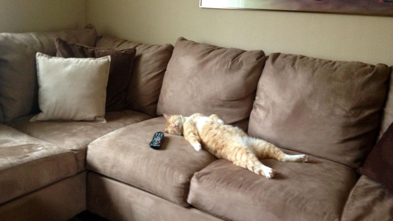 Смешные картинки про лентяя